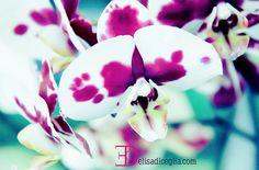 orchidea colori accesi