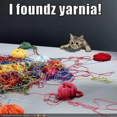 #cat #animal #humor Yarnia!                                                                                                                                                      More