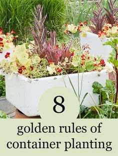 As much as we love a classic border design in a garden, it's also incredibly satisfying to experiment with different methods, including container planting. As well as a more traditional plant pot, alternative and slightly quirky plant containers can add height and texture to a garden and are a great way to express your personal style. Follow these golden rules and you won't go far wrong...