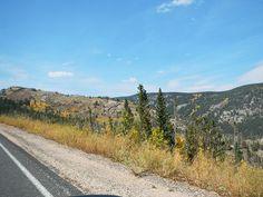 Gold Trees Sept.23, 2012  :    DSCN3985