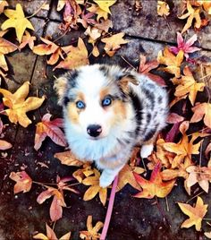 10 Pictures of Puppies Loving Fall, Because Pumpkin Spice is SO Last Season!