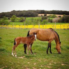 La pequeña tiene 1 mes y se llama Kalesi. #diariodeuninstagramer