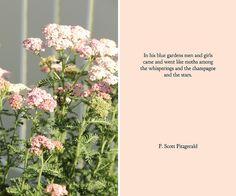 garden flowers by pastryaffair, via Flickr