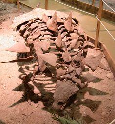 Gastonia_fossil.jpg (1506×1626) - G. burgei, Wyoming Dinosaur Center, Thermopolis. Auteur : Greg Goebel. 2006