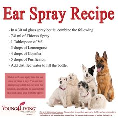 Young Living Essential Oil Animal Desk Reference Canine or Dog Ear Spray Recipe. Essential Oils Dogs, Doterra Essential Oils, Young Living Essential Oils, Young Living Pets, Dogs Ears Infection, Oils For Dogs, Yl Oils, Living Oils, Aromatherapy