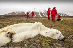 Everyone knows about climate change, but these photos make it all too real. Just take a look at the shocking effect that pollution has on our planet. Ellesmere Island, Save The Polar Bears, Polar Bears International, The Matrix, Deep Ecology, Chris Jordan, Frans Lanting, Climate Change Effects, Us Images