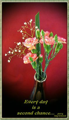Second chance, carnations Carnations, Crown, Plants, Jewelry, Pictures, Corona, Jewlery, Jewerly, Schmuck