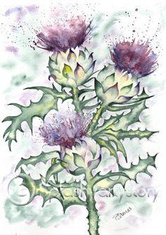 THREE SCOTTISH THISTLES Scotland art print of by SPLASHYARTYSTORY