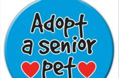 Adopt A Senior Pet ID Tag from picture gallery Pet Rescue Tags