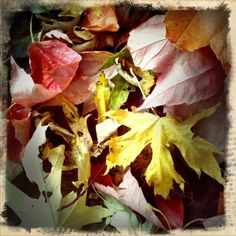 gorgeous fall leaves