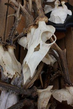 naturmaterial horn, döda djurdelar