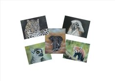 Your place to buy and sell all things handmade Pastel Artwork, Pastel Paintings, Endangered Species, White Envelopes, Paper Goods, Original Artwork, Wildlife, Christmas Gifts, Greeting Cards