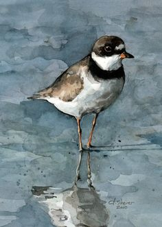 plover watercolor