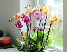 All About Plants, Garden Plants, Sweet Home, Planting, Gardening, Felting, Flowers, Plants, House Beautiful