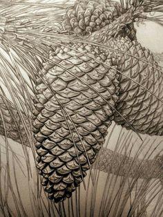 Gábor Emese botanical pencil drawing