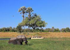 Okavango Delta, Sky Photos, Photo Competition, Photo Contest, Safari, Wonderland, Wildlife, Magic, Plants