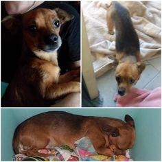 FOUND DOG: 09/13/2017 - Phoenix, Arizona, AZ, United States. Ref#: F36738 - #CritterAlert #FoundPet #FoundDog