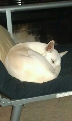 Curled up in a perfect little ball ♥