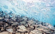 Der Bodengucker-Fisch kann sich nahezu unsichtbar machen, das macht das Foto...