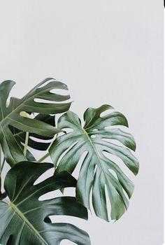 Plant Art Photography Print, Greenery, Botanic, Minimal, Printable Wall Art Instant Download 16