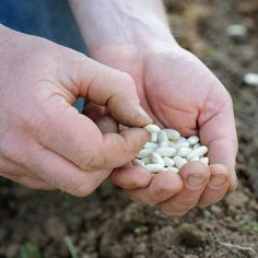 Vegetable seeds to sow in July