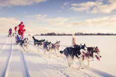Genießen Sie auf diesem 1,45-stündigen Husky-Erlebnis von Rovaniemi aus ein erlebnisreiches Weihnachts-Schneeabenteuer, das ideal für die ganze Familie ist. Reisen Sie in die arktische Landschaft und besuchen eine Huskyfarm für eine Husky-Schlittenfahrt, die Sie und Ihre Kinder nie vergessen werden. Treffen Sie die freundlichen Huskies, erfahren Sie mehr über deren Leben, steigen Sie in einen Schlitten oder erfahren Sie, wie Sie diesen selbst fahren.