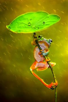 Photograph Raining by Ellena Susanti