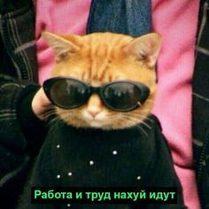by МЭМЫ ❌ Russian Cat, Russian Memes, Funny Cats, Funny Animals, Cute Animals, Crazy Cat Lady, Crazy Cats, I Love Cats, Cool Cats