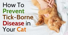 Tick-borne diseases that your cats can get include cytauxzoonosis, tularemia, haemobartonellosis, babesiosis, and ehrlichiosis. http://healthypets.mercola.com/sites/healthypets/archive/2015/07/19/tick-borne-diseases-cats.aspx