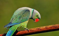Colors of Malabar................