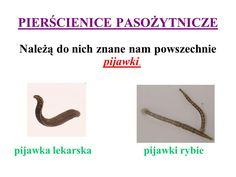 p. pasozytnicze