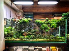 Aquarium Set, Aquarium Ideas, Aquarium Design, Planted Aquarium, Aquascaping, Freshwater Aquarium, Underwater World, Fish Tank, Faeries