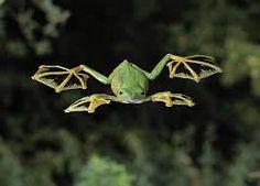 Резултат с изображение за frog