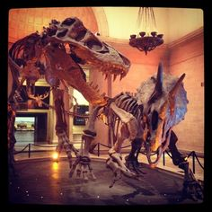 Natural History Museum of Los Angeles County in Los Angeles, CA. Use to go here all the time when I was a kid.