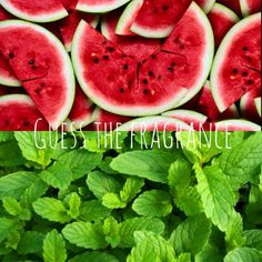 Scentsy Facebook Game - Guess the fragrance. Watermelon Mint. https://jessikaboyd.scentsy.us