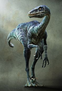 Velociraptor is a genus of dromaeosaurid theropod dinosaur that lived approximately 75 to 71 million years ago during the later part of the Cretaceous Period. Two species are currently recognized, although others have been assigned in the past.