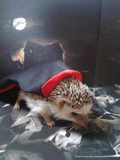 24 Animals (That Aren't Dogs) In Costumes - Neatorama