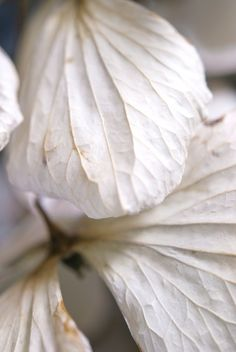 natural beauty- plant leaves