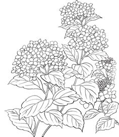 drawings of foxes Adult Coloring Pages, Printable Flower Coloring Pages, Colouring Pages, Coloring Books, Flower Line Drawings, Flower Sketches, Art Drawings, Watercolor Flowers, Watercolor Art