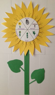 Science Experiments For Preschoolers, Preschool Science, Kindergarten Crafts, Preschool Crafts, Sunflower Life Cycle, Plant Lessons, Life Cycle Craft, Theme Nature, Preschool Garden