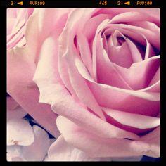 Rose, it is