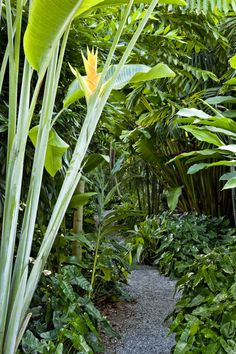 ✔ best tropical garden design ideas 00017 ~ Ideas for House Renovations, - tropical garden ideas Tropical Garden Design, Tropical Backyard, Tropical Landscaping, Landscaping With Rocks, Tropical Plants, Backyard Landscaping, Landscaping Ideas, Walkway Ideas, Landscaping Software
