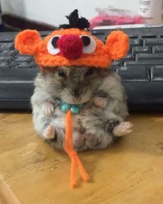 "Páči sa mi to: 467, komentáre: 5 – Pusanisa Disapirom (@yutafamily) na Instagrame: ""แฟชั่นหมวก ของปู่ลูซี่ #hamsanecklace #hamstrings #hamstergram #hamsiköy #hamstringstretch…"""