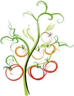 tomato vine drawing - Google Search