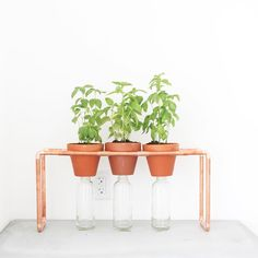 Come to the #DIYworkshop I am teaching at the NY @homedepot on West 23rd street Saturday September 12th at 10am. It is free to attend you just have to go to that store's website  to register. We are going to make plant stands that are perfect for setting up a window garden. #homemademodern #DIYworkshop #urbanfarming #herbgarden #growyourfood #garden #letsdothis #diygarden by benjaminuyeda