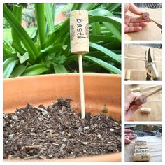 Plant Marker | Img @ BuzzFeed. http://www.buzzfeed.com/pippa/25-things-you-can-make-with-corks?sub=1838430_658622