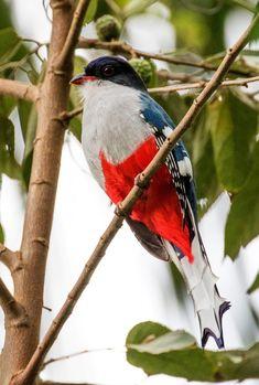 13 des plus beaux oiseaux du monde dont le plumage est une explosion de couleurs Ara Hyacinthe, Dame Nature, Pretty Birds, Parrot, Plumage, Animals, Birds, Colourful Birds, Beautiful Birds