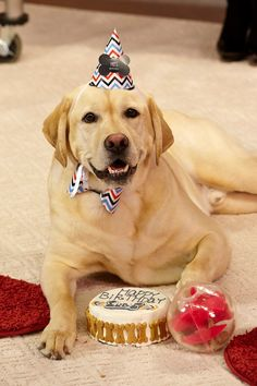"Watch Dara Foster's Tips On The Better Show "" How To Throw A Stress Free Dog Birthday Party!"" - See more at: http://www.pupstyle.com/pupstylish-photos/watch-dara-fosters-tips-on-the-better-show-how-to-throw-a-stress-free-dog-birthday-party#sthash.UwxzMNx9.dpuf"