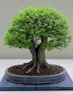 ♥☼Some #bonsai inspiration for the day!☺● #BonsaiInspiration