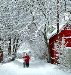 Inverno in Finlandia: neve, boschi e fiabe - Un inverno bianco e rosso
